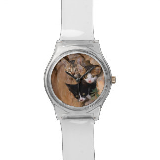 Drei niedliche neugierige Katzen-Kätzchen-lustiges Armbanduhr
