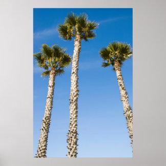 Drei Palmen Poster