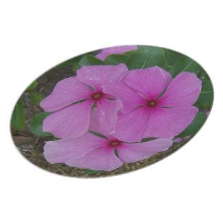 Drei rosa Madagaskar-Singrüne Teller