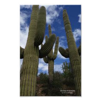Drei Saguarokakteen gegen blauen Himmel und Wolken Fotodruck