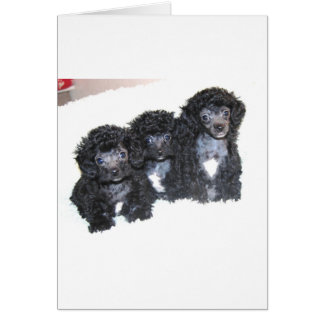 Drei schwarze silberne Pudel-Welpen Grußkarte