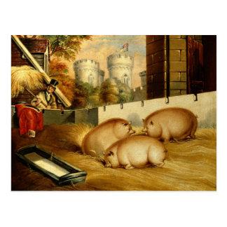 Drei Schweine mit Schloss im Hintergrund Postkarte