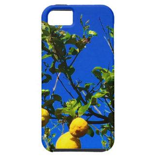 Drei sizilianische Zitronen Hülle Fürs iPhone 5
