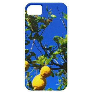Drei sizilianische Zitronen iPhone 5 Schutzhülle
