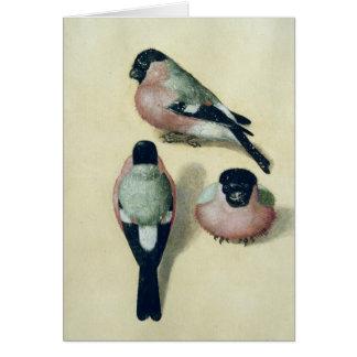 Drei Studien eines Bullfinch Grußkarten