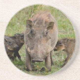 Drei Warthog Ferkel säugen auf ihrer Mutter Untersetzer