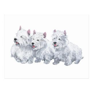 Drei Westhochland-weiße Terrier Postkarte