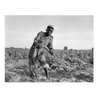 Dreizehn-jähriges altes, ein Feld in Georgia Postkarte