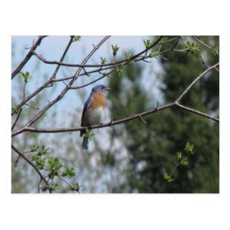 Drossel auf einem Baum Postkarte