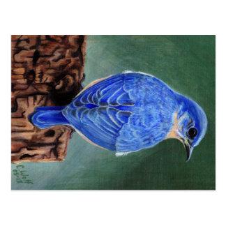 Drossel-Leinwand-Malerei Postkarte