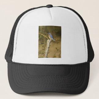 Drossel-Vogelkunde Truckerkappe