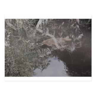 DSC_0958 (2).JPG Fisch-Entwurf durch Jane Howarth Postkarte