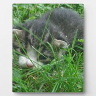 Dschungel-Kätzchen Fotoplatte
