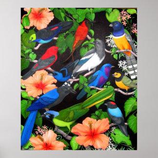 Dschungel-Vögel von Mexiko Plakatdruck