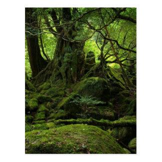 Dschungel-Wald des Mooses Postkarte