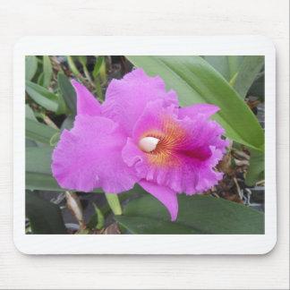 DSCN3771.JPG lila Orchidee Mousepad