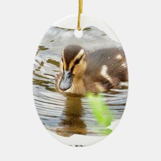 DUCKLING ENTENKÜKEN Photo Jean-Louis Glineur Keramik Ornament