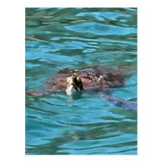 Dummkopf-Meeresschildkröte Postkarte