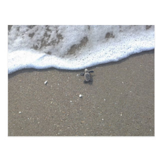 Dummkopf-MeeresschildkröteHatchling Postkarte