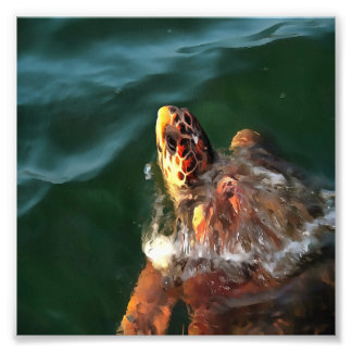 Dummkopf-Schildkröte Fotodruck