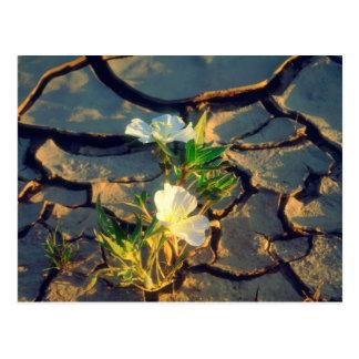 Dünen-Primel, die aus gebrochenem Schlamm heraus Postkarte