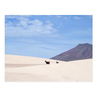 Dünen von Corralejo, Fuerteventura, Kanarische Postkarte