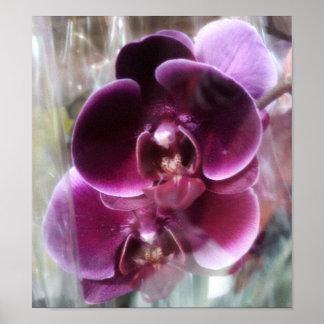 Dunkle lila Motten-Orchideen Poster
