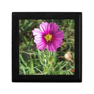 Dunkle rosa Kosmosgänseblümchen-Blume Erinnerungskiste