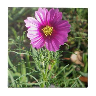 Dunkle rosa Kosmosgänseblümchen-Blume Keramikfliese