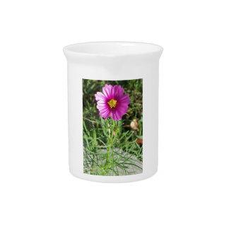Dunkle rosa Kosmosgänseblümchen-Blume Krug