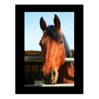 Dunkles Brown-Pferdepostkarte Postkarte