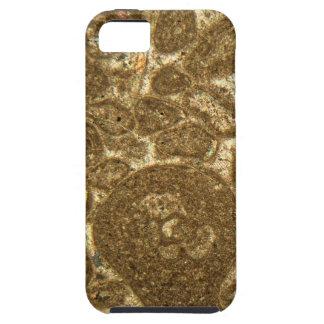 Dünner Abschnitt des Paleozoic Kalksteins unter iPhone 5 Case