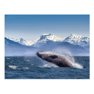 Durchbrechen des Buckel-Wals in Alaska Postkarte
