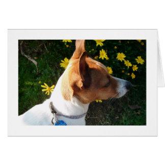 Durchdachter Hund Karte