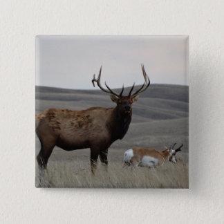 E0063 Stier Elche und Pronghorn Antilope Quadratischer Button 5,1 Cm