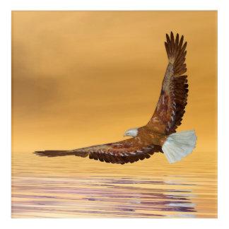 Eagle, das zur Sonne fliegt - 3D übertragen Acryldruck