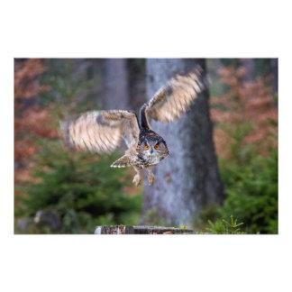 Eagle-Eulen-Jagd Fotodruck