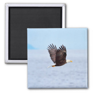 Eagle im Flug Quadratischer Magnet
