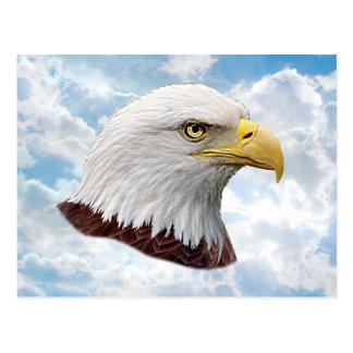 Eagle-Kopf - Postkarte