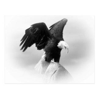 Eagle-Postkarte Postkarten