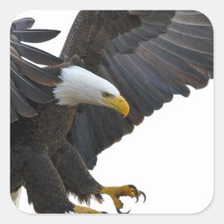 Eagle Quadratischer Aufkleber