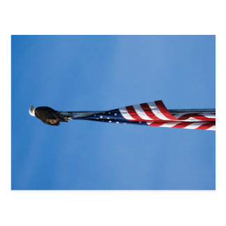Eagle und amerikanische Flagge - Postkarte