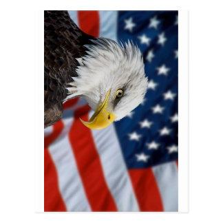 Eagle und Flagge Postkarte