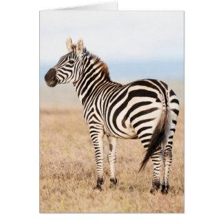 EbenenZebra oder gemeiner Zebra (EquusQuagga) 3 Karte