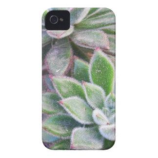Echeveria harmsii Case-Mate iPhone 4 hülle