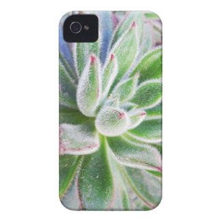 Echeveria harmsii Case-Mate iPhone 4 hüllen