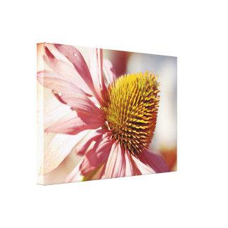 Echinacea bloom leinwanddruck