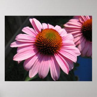 Echinacea mit Bestäuber Poster