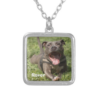 Editable Brown Pitbull im Gras Versilberte Kette