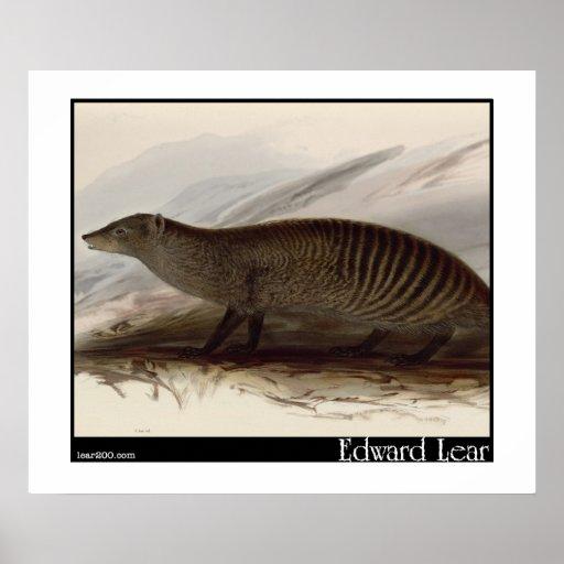 Edward Lear mit einem Band versehener Mungo Posterdruck